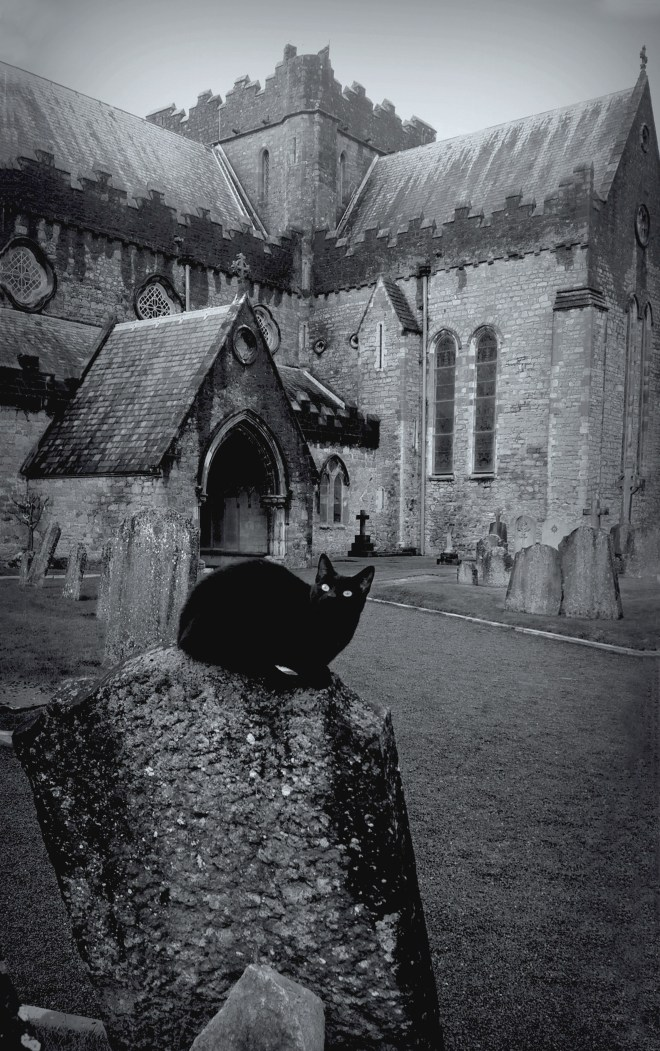29_-_The_Witches_Familiar_-_St_Canices_Cathedral_-_Co_Kilkenny_-_Ireland.