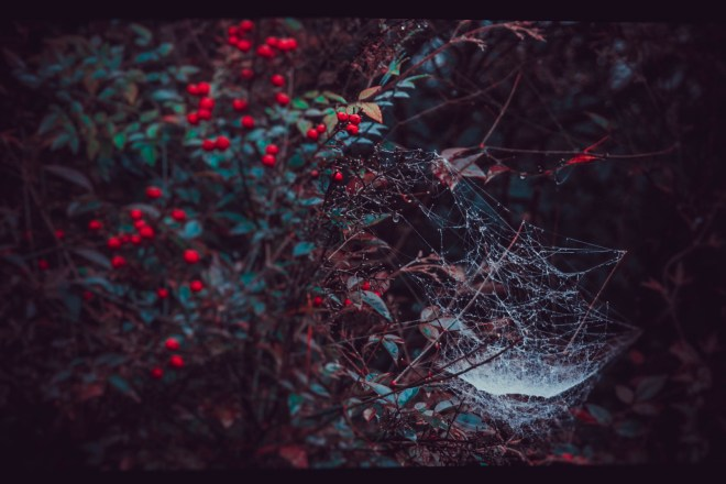red_web