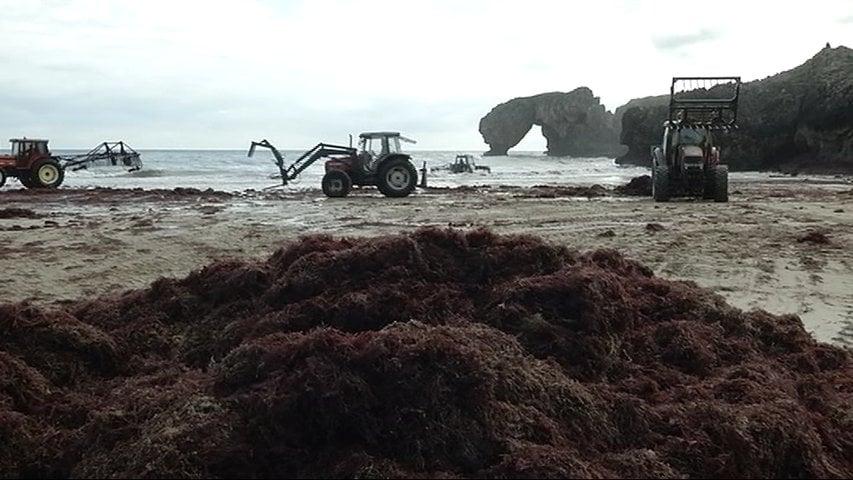 ¡Cuántas patatas, ajos, tomates, lechugas, fresas y cebollas se habrán desarrollado gracias al medio marino!