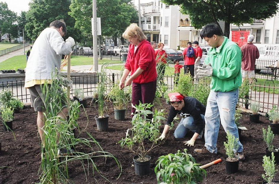 Planting at Ronan Park