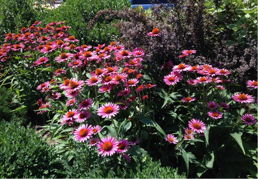 The Greenway's Vibrant Plantings