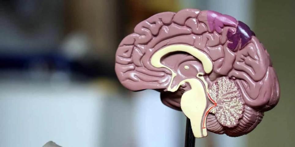 атака вирусов на мозг