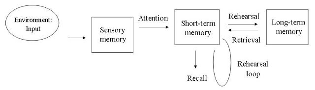 Dualstore model of memory by Atkinson and Shiffrin