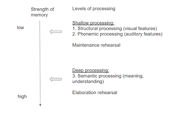 Levels of processing theory of memory by Craik and lockhart