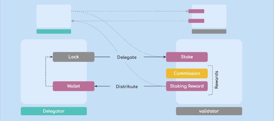 Validators vs Delegators
