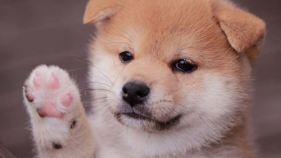 248% Weekly Gains — Baby Doge Coin Continues to Rally While Most Crypto Asset Markets Slump