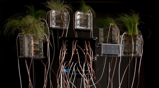 Crypto Power Plants – Mining mit Grünpflanzen und Photosynthese