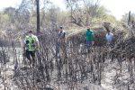 Trabaja Gobierno de Los Cabos para sofocar fumarolas y limpiar la zona afectada por incendio en el Estero de San José del Cabo
