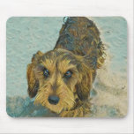 wirehaired