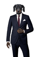 Bronnie the dachshund modeling a suit