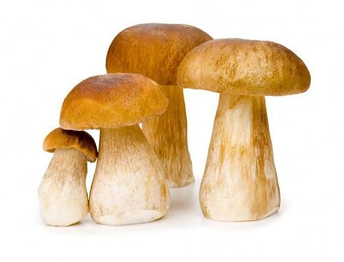 gribu - Камеры для хранения грибов