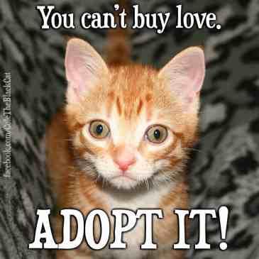 adopt it