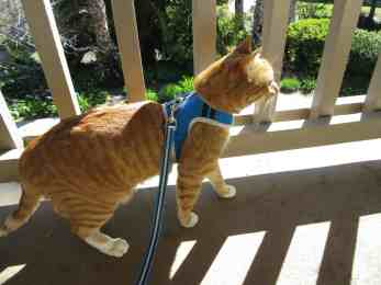 Marm looks very dashing with his harness on :)