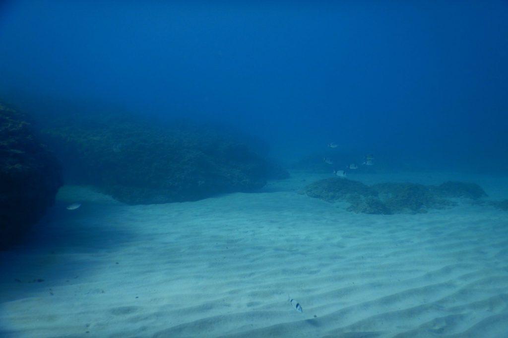 Fondo del mar arenoso en La Ametlla de Mar