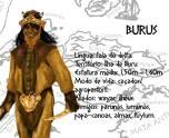 Burus