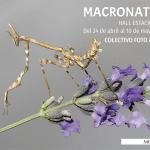 Nueva exposición «Macronatura»