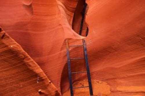 Antelope Ladders