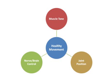 chiropractic rehabilitation diagram