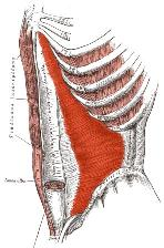 Injury to the bone and/or muscle can cause pain.