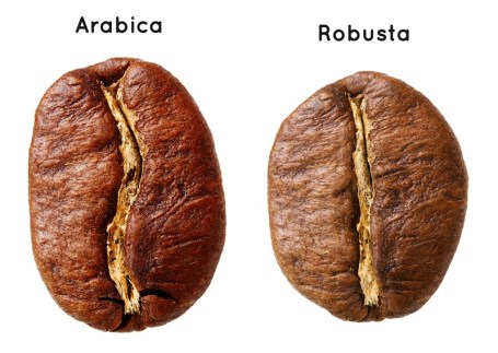 arabica vs. robusta, two main species of coffee bean, coffee plant species, coffee varieties