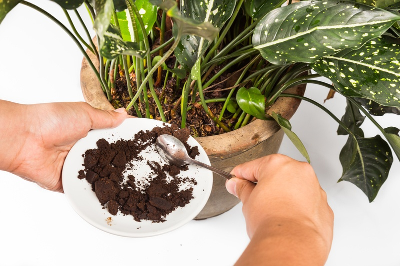 Coffee grounds for gardening Coletti Coffee