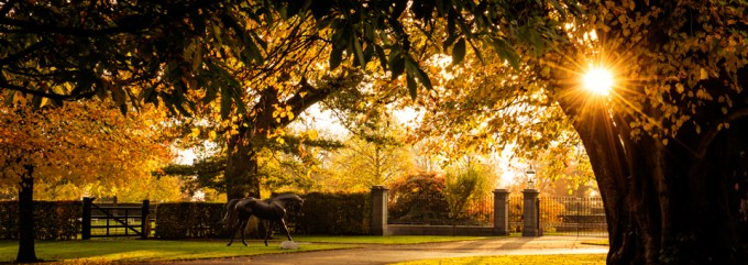 Yeats statue at Coolmore
