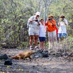 Taking photographs of a Galapagos land iguana