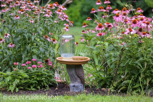 Bird bath next to purple coneflowers