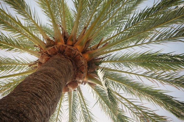 Palm is an important source of cosmetic raw materials
