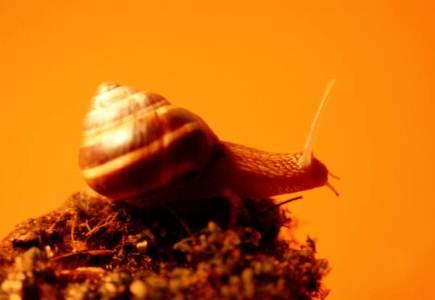 snail-slime