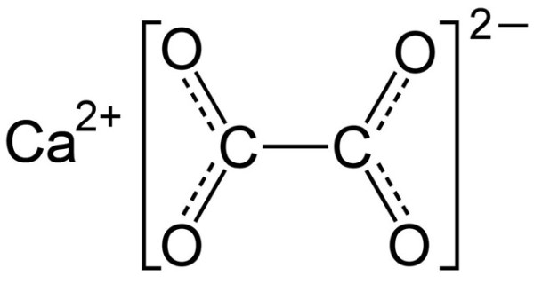 cristaux d'oxalate de calcium