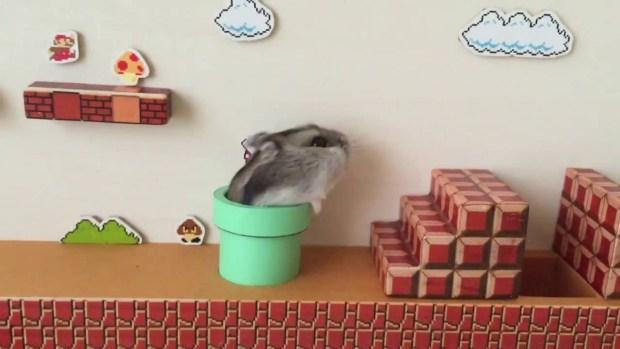 Súper Mario Hamster