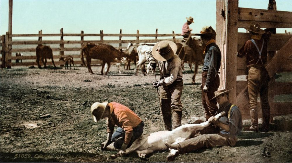 Getting Creative Brand is Greater Than Blog Post COLLABORATOR Creative DP Knudten Branding Calves c.1900