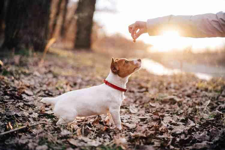 Dog offer treat