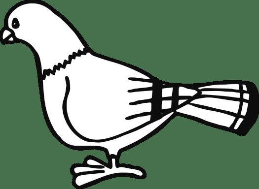 pigeon-305425_960_720