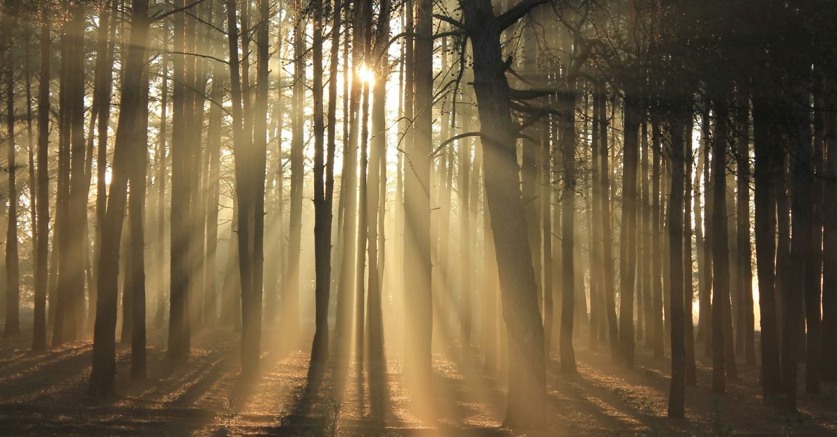 Reforesting Faith: Are trees essential to every Christian's understanding of God? (5/100)