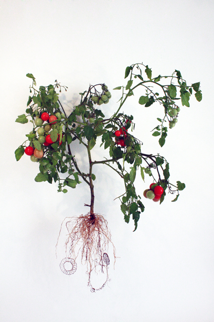 carolecollet-biolace-tomato1