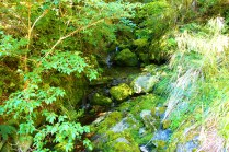 Lush green waterfall on the Tablelands Circuit.