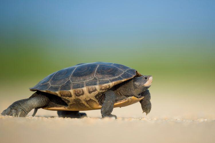 turtle slowdown summer step back