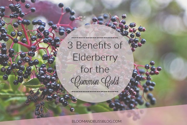 3 Benefits of Elderberry to Fight the Common Cold