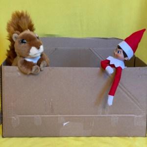 Squirrel and elf hiding in a cardboard box.