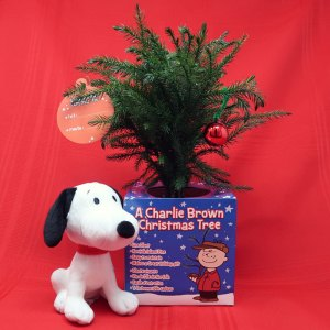 Live Charlie Brown Christmas Tree from Costa Farms