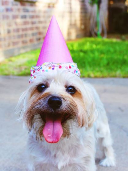 Dog with party hat at surprise party