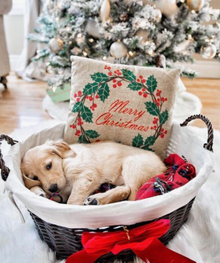 Christmas dog photo in basket with pillow