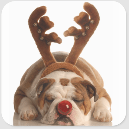 Christmas dog photo with rudolph nose and antlers