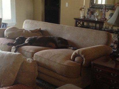 My poor couch...