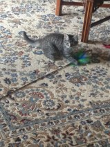A real cat toy!!!