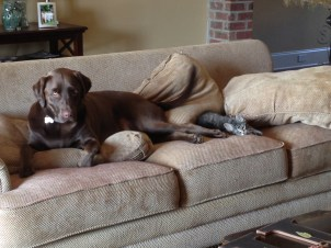 She loves sleeping beside Wowo...my poor couch.