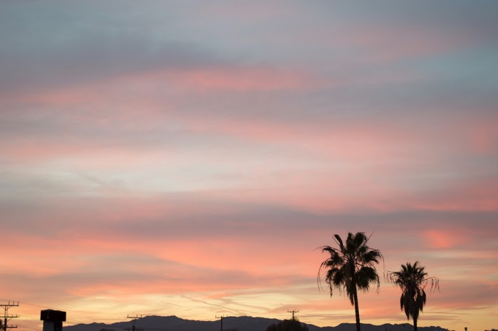 los angeles california pastel sunset palm trees