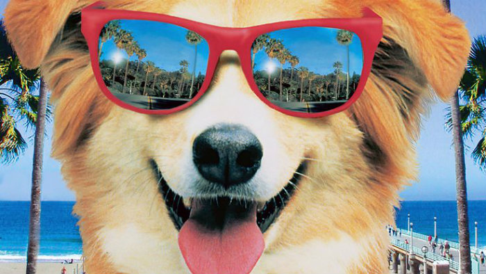 dog air bud golden retriever aviator sunglasses palm trees beach retro vintage